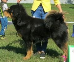 Guinevere Bubbledog